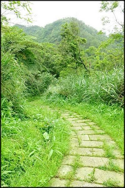 平湖森林步道_57.jpg