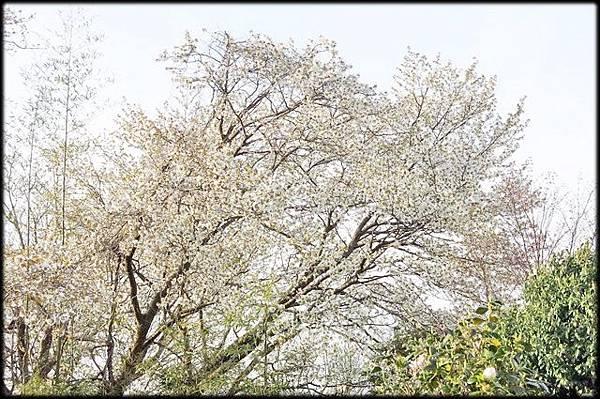 新潟傳奇(2)_29.jpg