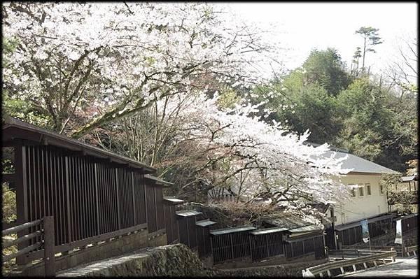 新潟傳奇(2)_157.jpg