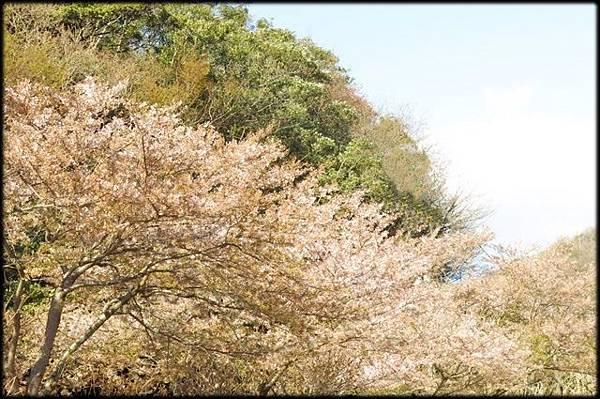 新潟傳奇(2)_340.jpg