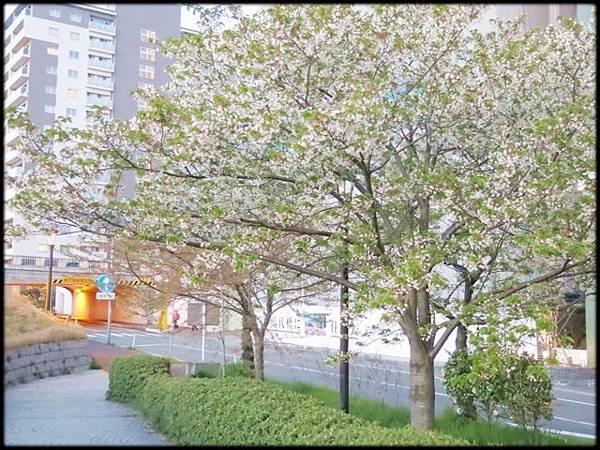 新潟傳奇(3)_297.jpg
