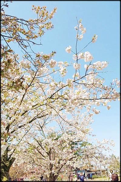 新潟傳奇(4)_125.jpg