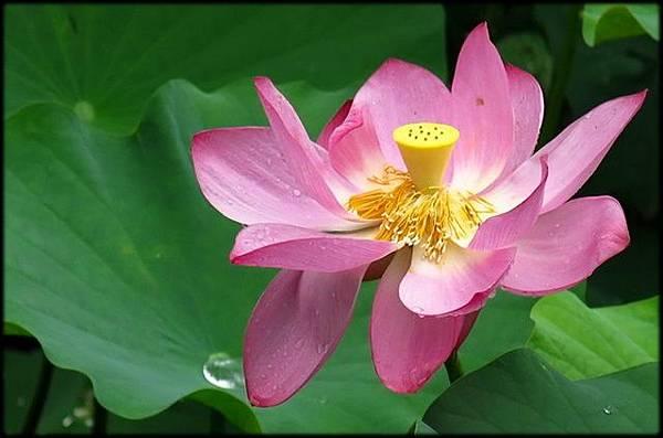 初夏植物園花卉_20.jpg