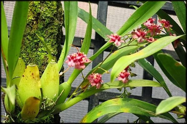 新埔花園_157.JPG