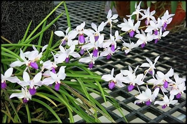 新埔花園_167.JPG