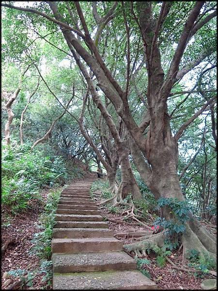 虎頭山五分山步道_040.jpg