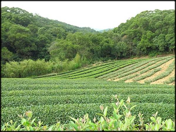 竹圃小木屋農場_007.jpg