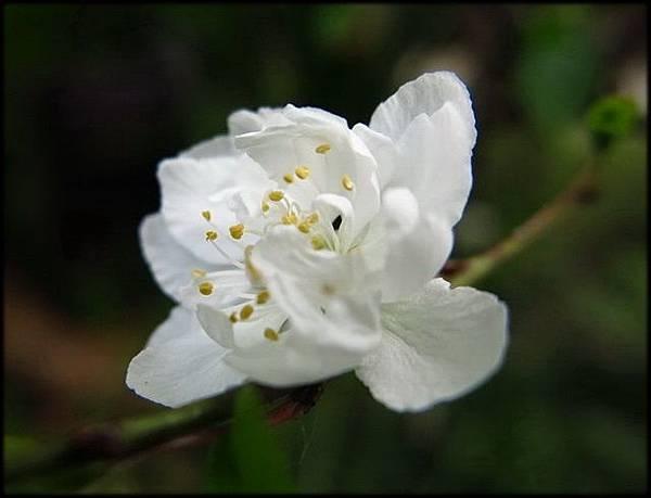 2018春節植物園_083.jpg