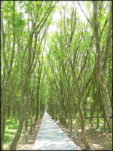 溪州公園_104.JPG