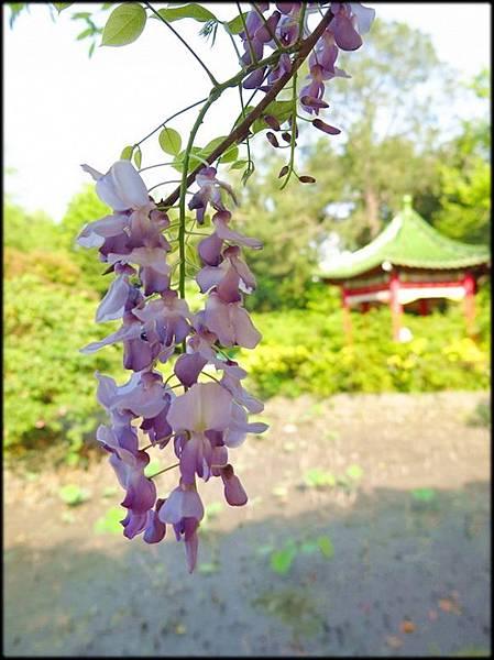 107植物園_10.jpg