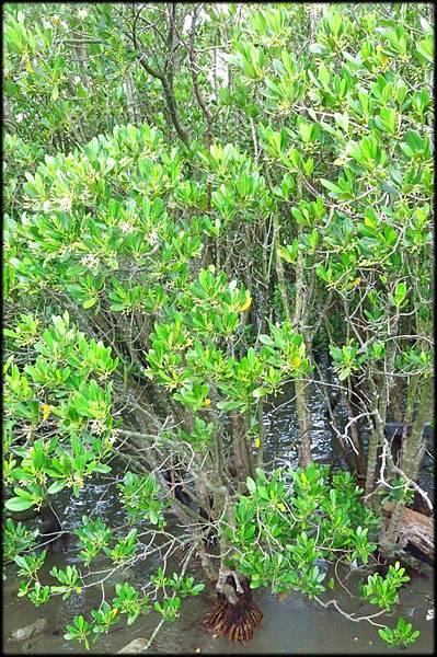 觀音藻礁保護區_8987.jpg