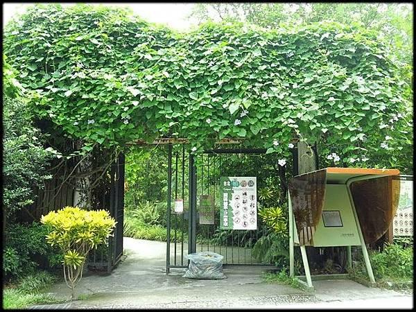 植物園秋荷_56.jpg