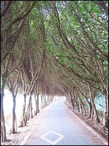 香山風情海岸步道_53.jpg