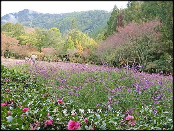 武陵農場(2)_034.jpg