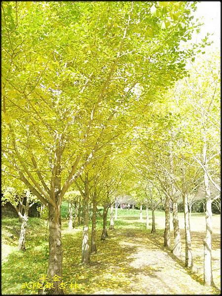 武陵農場(2)_275.jpg