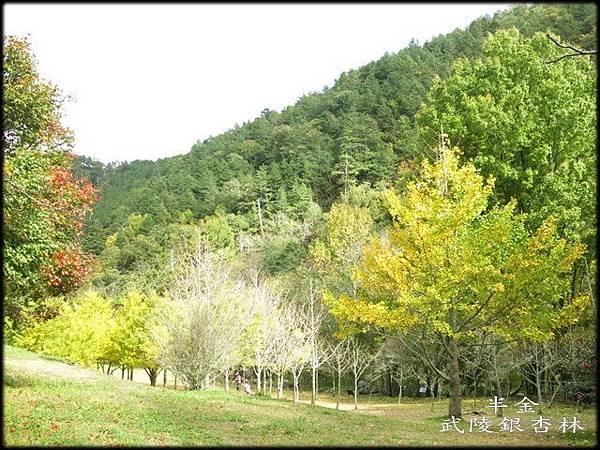 武陵農場(2)_288.jpg
