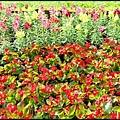 坪林石雕公園蕨類步道_004.jpg