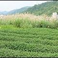 坪林石雕公園蕨類步道_012.jpg