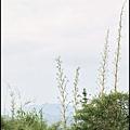 坪林石雕公園蕨類步道_039.jpg