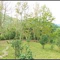 坪林石雕公園蕨類步道_031.jpg