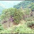 坪林石雕公園蕨類步道-1_004.jpg