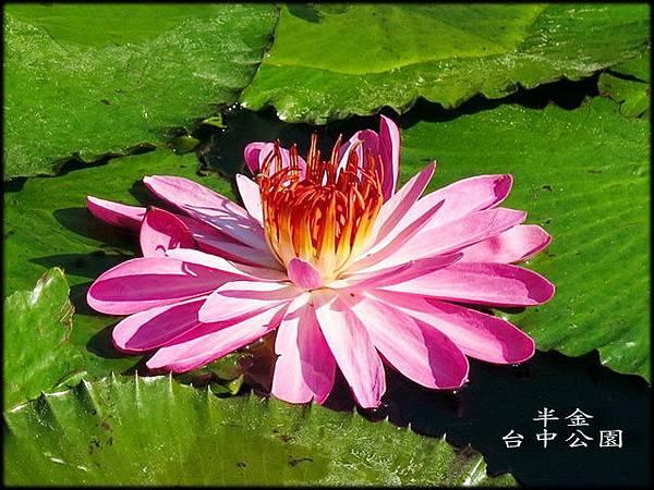 台中公園_128.jpg