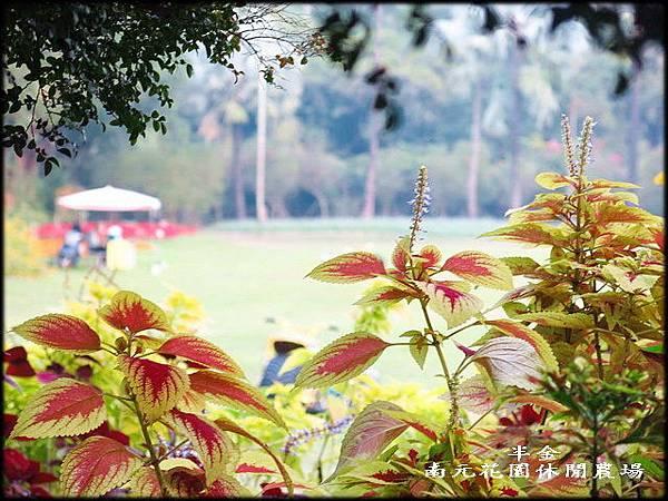南元休閒農場_245.jpg