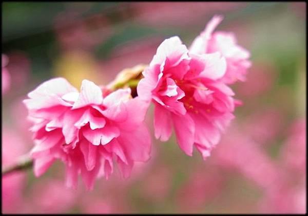 紫微天后宮-3_001.jpg