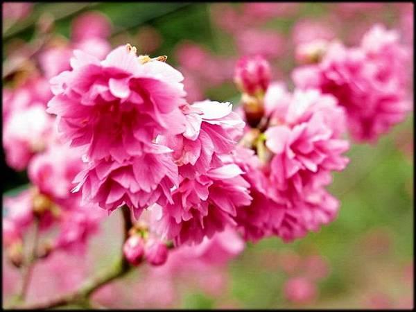 紫微天后宮-3_003.jpg