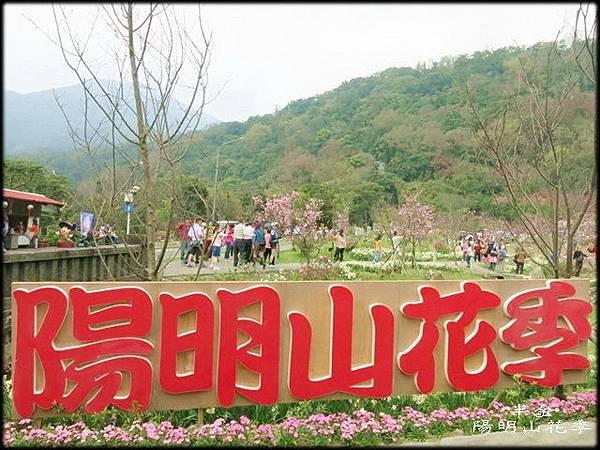2019陽明山櫻花_137.jpg