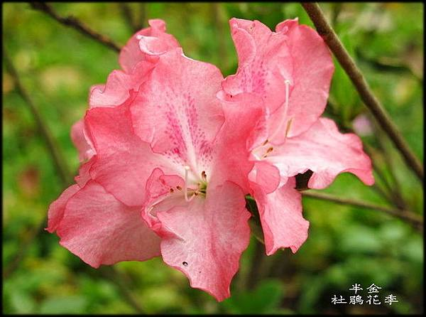 大安森林公園_011.jpg