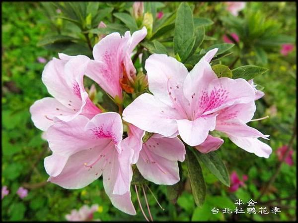 大安森林公園_020.jpg