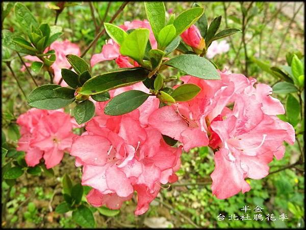 大安森林公園_019.jpg