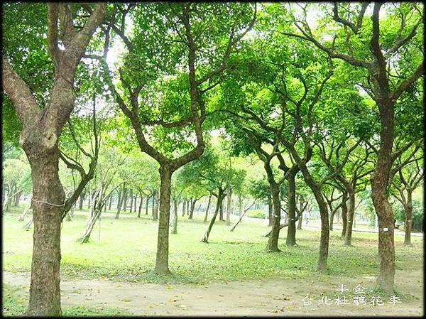 大安森林公園_022.jpg