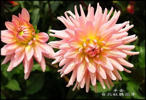 大安森林公園_030.jpg