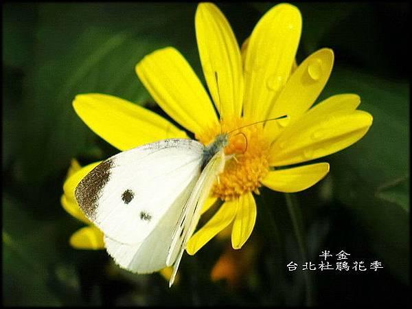 大安森林公園_031.jpg