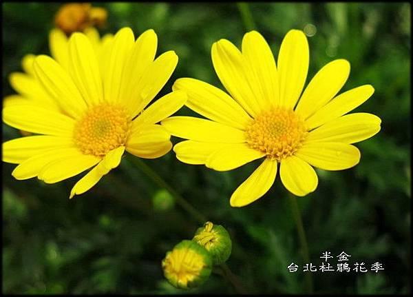 大安森林公園_032.jpg