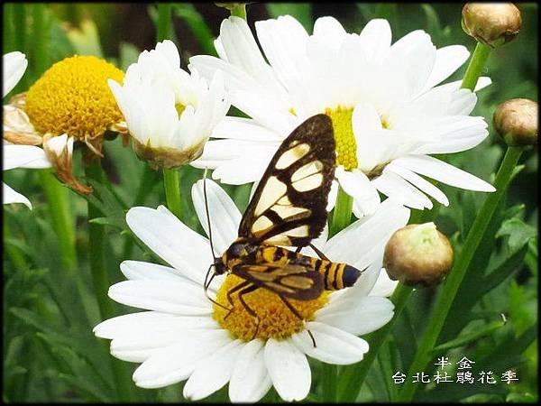 大安森林公園_044.jpg