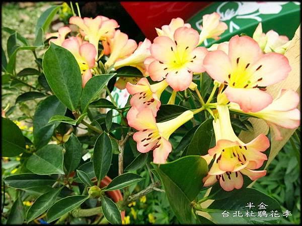 大安森林公園_059.jpg