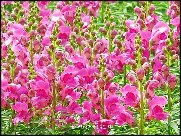 大安森林公園_064.jpg
