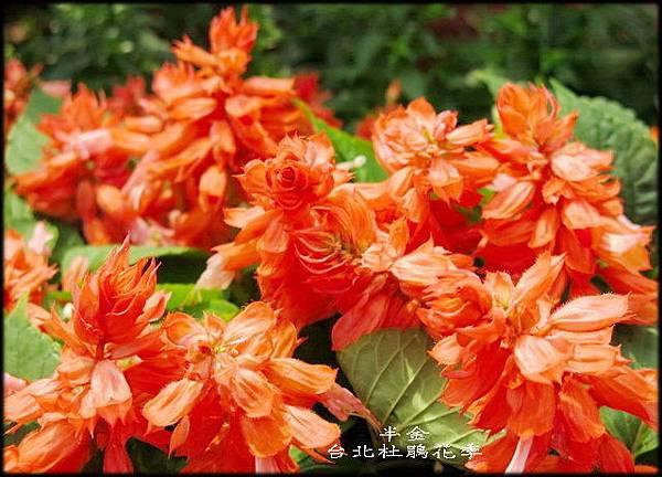 大安森林公園_065.jpg