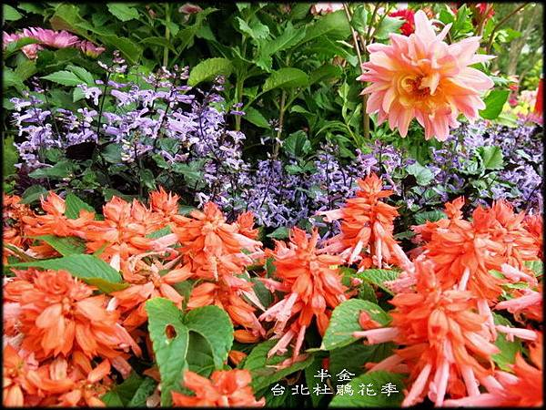 大安森林公園_073.jpg