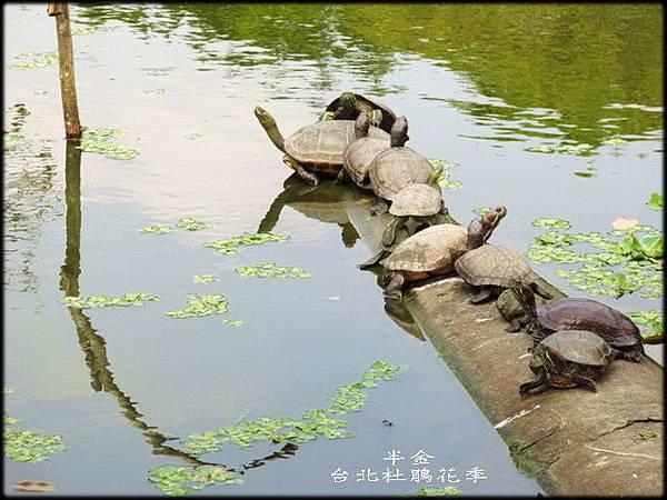 大安森林公園_077.jpg