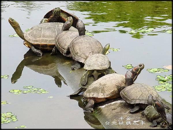 大安森林公園_078.jpg