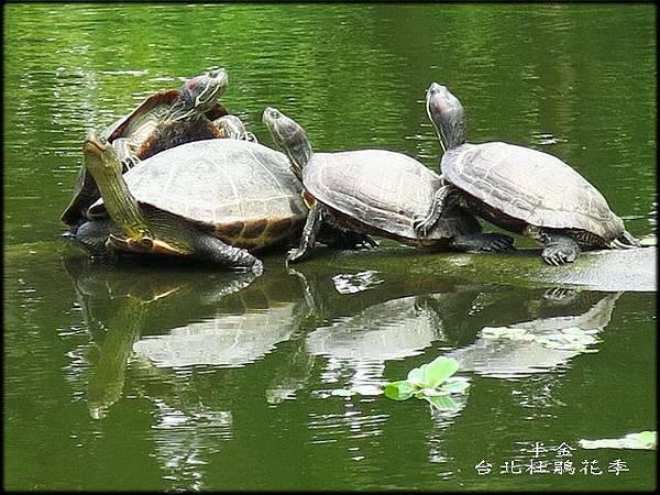 大安森林公園_081.jpg