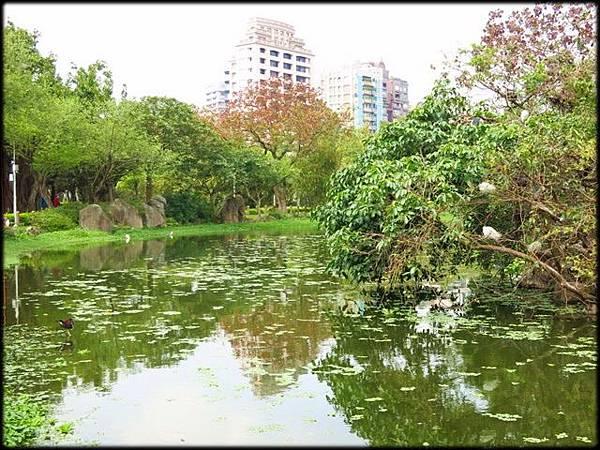 大安森林公園_082.jpg