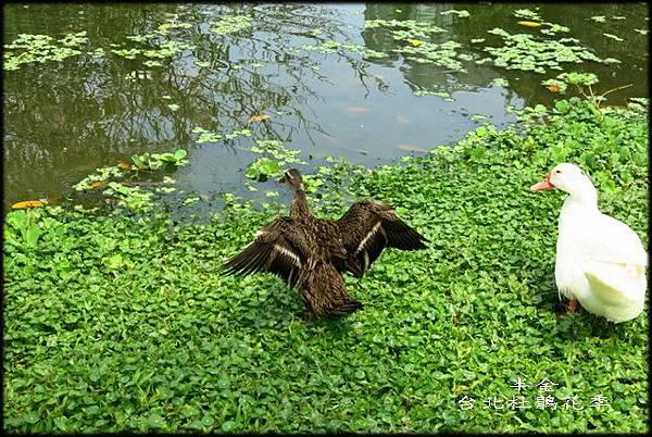 大安森林公園_080.jpg