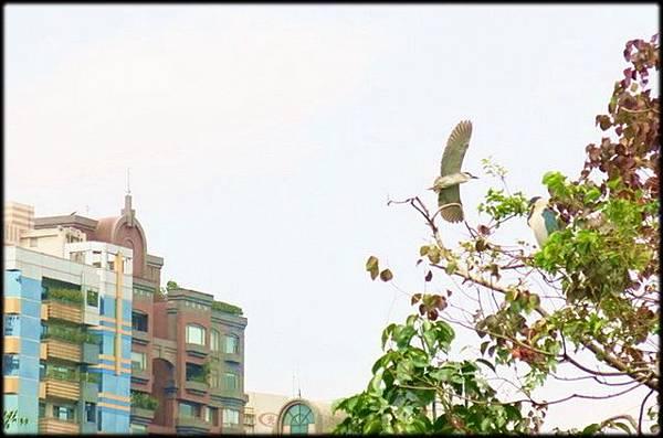 大安森林公園_093.jpg