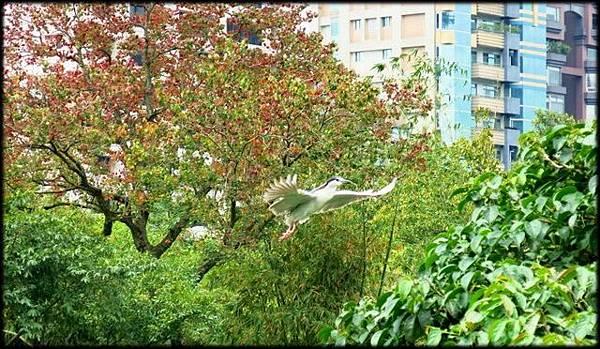 大安森林公園_088.jpg