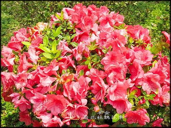 大安森林公園_108.jpg